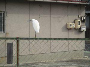 鳥のフン対策
