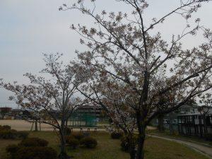 ☆桜のきれいな公園☆