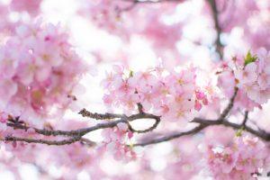 来年春3月入居OK!