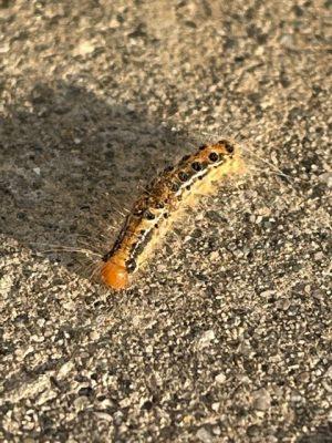 毛虫の脅威・・・